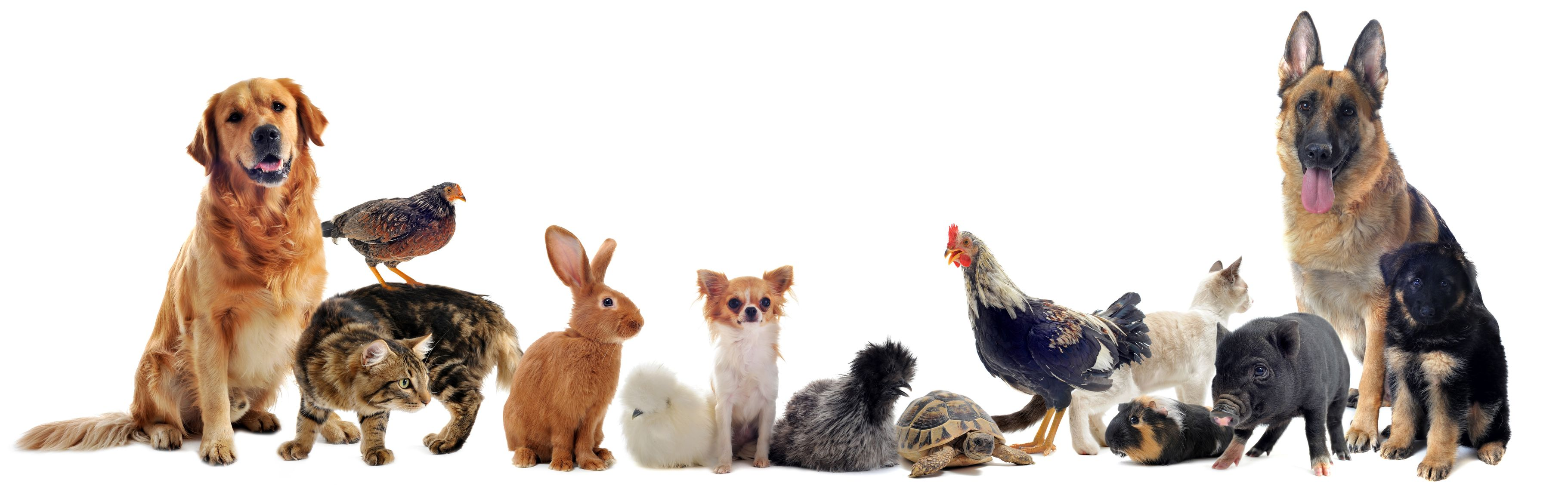 Animal Health Care - Pets Are Part of the Family Too!